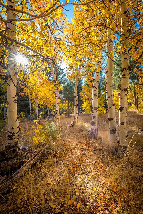 Aspen Galena Forest Reno