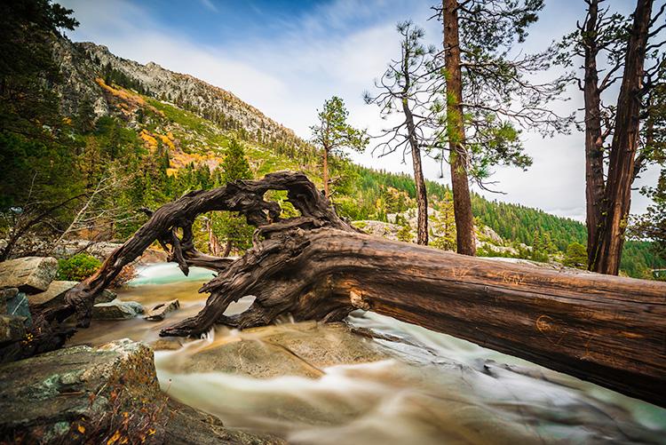 Tree Eagle Falls