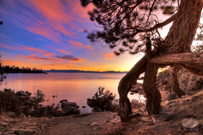 Tree Lake Tahoe