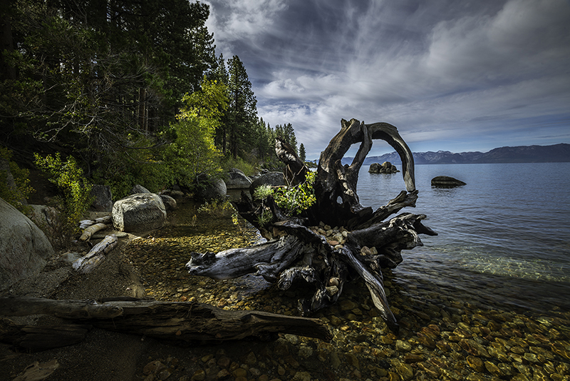 Tree stump Lake Tahoe