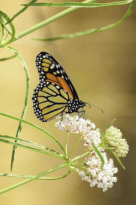 Monarch 3 Vertical