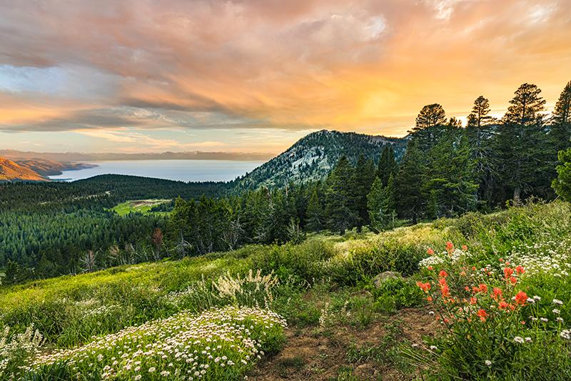 Spring Mt Rose