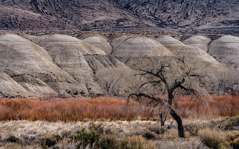 Lone tree Nevada